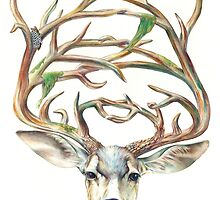 Buck by Brandon Keehner