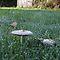 Fungi in grassed land. (Voucher Challenge, January)