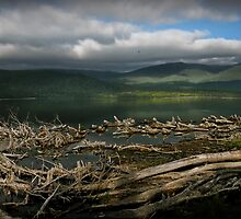 Te Anau Lake by Peter Kurdulija