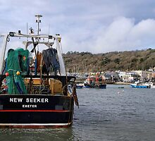 New Seeker - Lyme Regis by Susie Peek