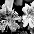 B&W Flower Photography #1 by Jessica Slater