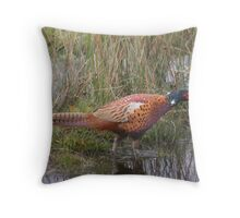 Wild pheasant Throw Pillow