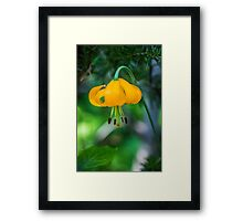 Yellow-Orange Flower with Curling Petals Framed Print