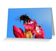 Taking off! - Bumblebee - Rhododendron - NZ Greeting Card