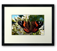 Natures Markings - Red Admiral Butterfly - NZ Framed Print