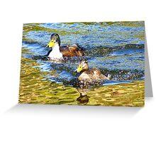 The Race is on! - Mallard Ducks - NZ Greeting Card