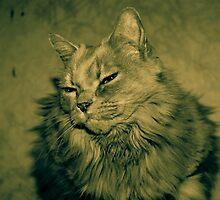 Fluff Cat Dutone 1 by wetdryvac
