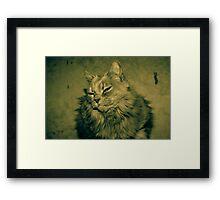 Fluff Cat Dutone 1 Framed Print