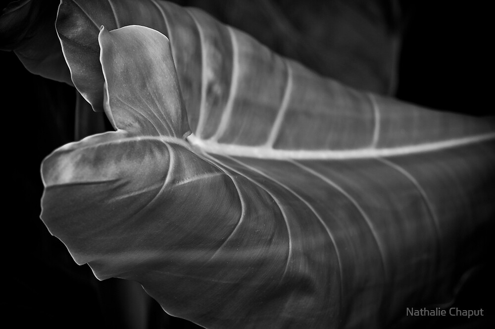 Leaf by Nathalie Chaput