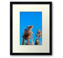 Fluffy Seed Things 1 Framed Print