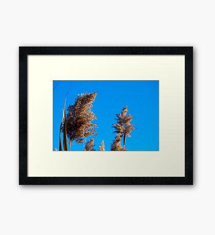 Fluffy Seed Things 2 Framed Print