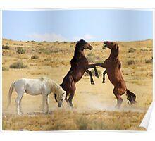 Desert Dance Poster