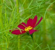 Lone Red Flower Sticker
