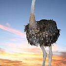 Big Bird by Chris Coetzee