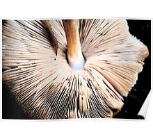 Mellower Mushroom Poster