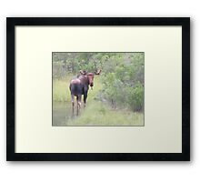 Mysterious Moose Framed Print