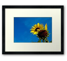 Seasons End Sunflowers Framed Print