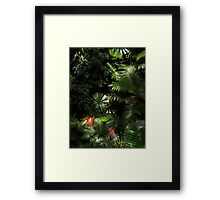 Daintree National Park North Queensland  Framed Print
