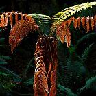 Young Tree Fern near Mount Wellington  by Imi Koetz