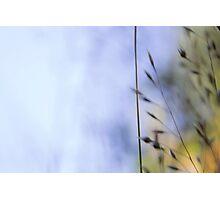 weeds i Photographic Print