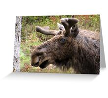 Moose up close Greeting Card