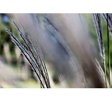 weeds iii Photographic Print
