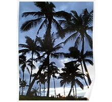 Palm Tree Silhouette  Poster