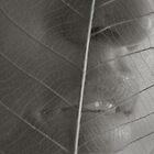 leaf by Suryani Shinta