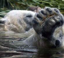 Polar Bear Foot by Kat Meezan