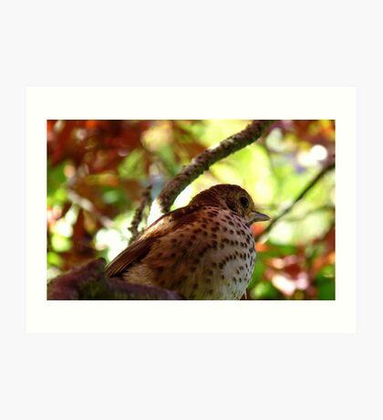 Maple Tree Dweller! - Baby Song Thursh! - NZ - Southland Art Print