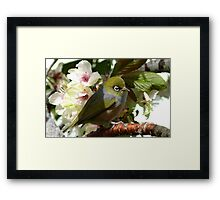 I'm waiting for my bride! - Silvereye - NZ Framed Print