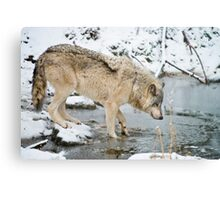 OHHH, That's Cold Metal Print