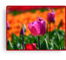 A Little Pink to add more Colour! - Tulip Plantation - NZ Canvas Print