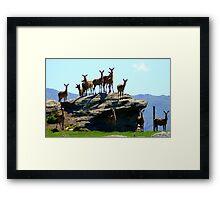 The Vantage Point! - Deer - NZ Framed Print