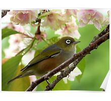 Here Comes The Bride! - Silvereye - NZ Poster