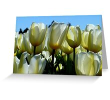Reaching For The Blue Sky! - White Tulips - NZ Greeting Card