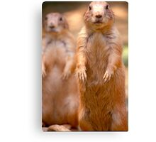 Yea, I see you. Canvas Print