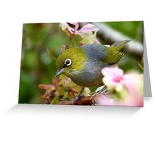 Get Serious! - Silvereye - NZ Greeting Card