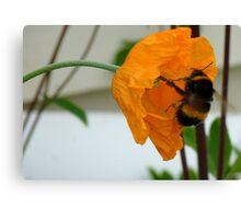 Oops! We Are Falling! - Bumble & Poppy! - NZ Canvas Print