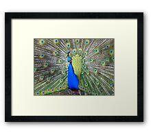 Am I Impressing YOU Yet! - Peacock - NZ Framed Print