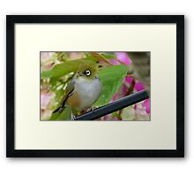 Perfection - Harmony With Nature - Silver-eye - NZ Framed Print