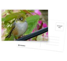 Perfection - Harmony With Nature - Silver-eye - NZ Postcards