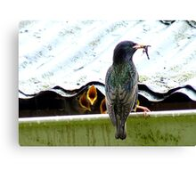 I Can't Remember Who Next! - Starling - NZ Canvas Print