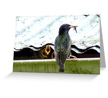 I Can't Remember Who Next! - Starling - NZ Greeting Card