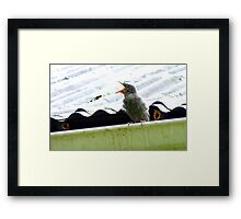I'll Be Smart! - Starlings Chick - NZ Framed Print