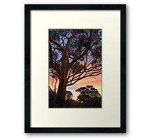 Marvel Tree HDR Framed Print