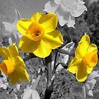 Black & White and Yellow by wildrider58