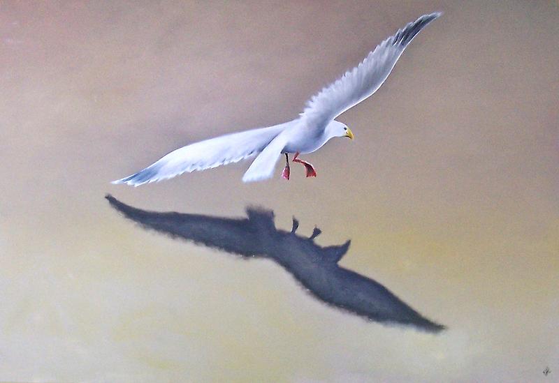 Seagull in Flight 2 by Karsten Stier
