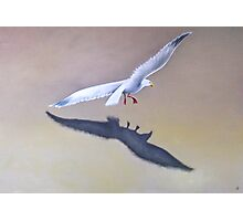 Seagull in Flight 2 Photographic Print