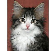 Meet Harry! Photographic Print